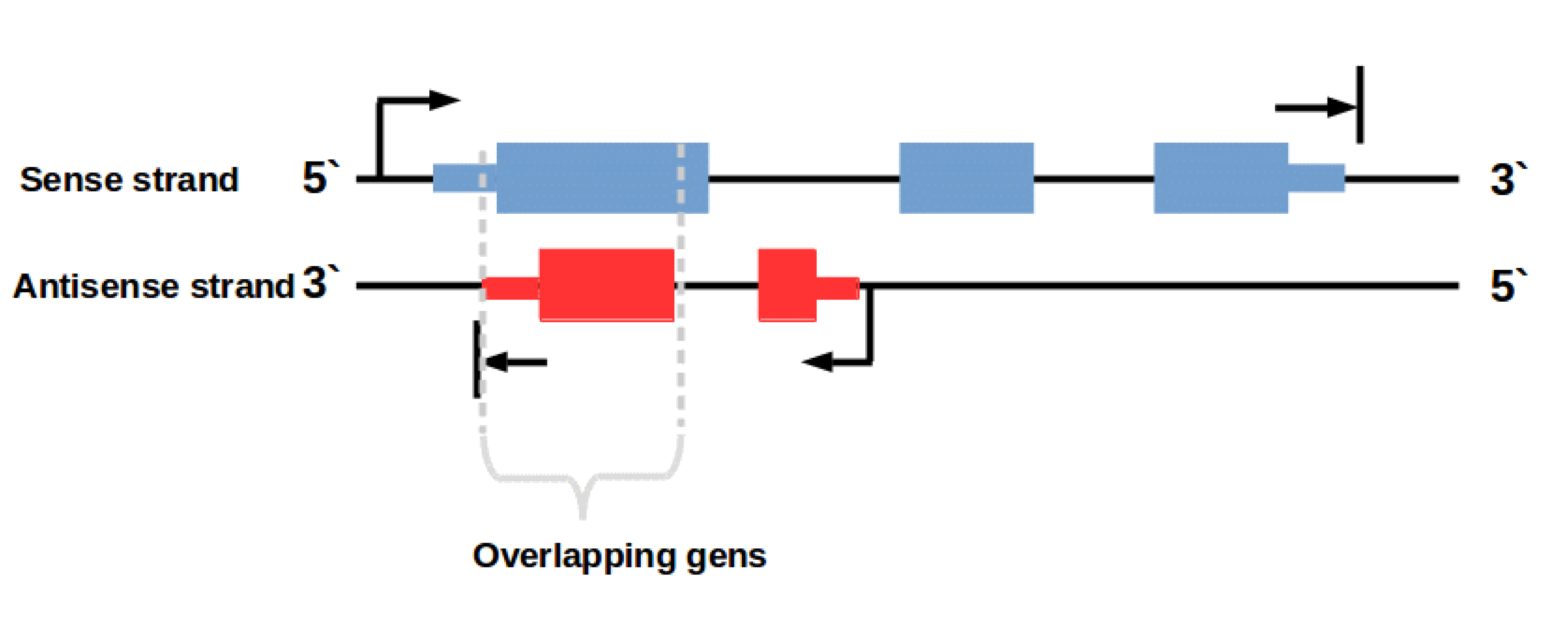 How do strand specific sequencing protocols work?